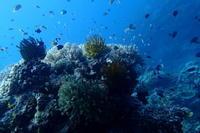 17.9.25夏はまだまだ!! - 沖縄本島 島んちゅガイドの『ダイビング日誌』