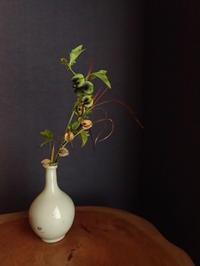 クロホオズキ - 暮らしと植物のブログ