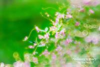 ふわふわ。。。萩の花。 - ON THE WIND  *mummy's Diary