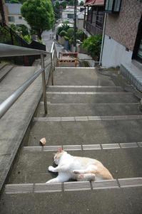 赤羽  階段・ネコ・再び階段 - 東京雑派  TOKYO ZAPPA