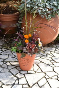 秋色の寄せ植えいっぱい♪ - 小さな庭 2