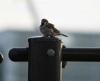 今日の鳥さん 170921 №2 - 万願寺通信