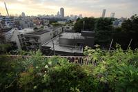 9月のベランダ - 東京ベランダ通信