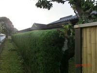 垣根剪定 - 家の周りの季節感