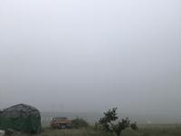 朝の定点観察「深い霧に包まれた、柔らかい乳白の世界」編 - ドライフラワーギャラリー⁂ふくことカフェ