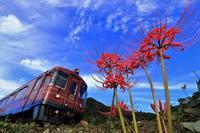 彼岸花と観光列車2 - 今日も丹後鉄道