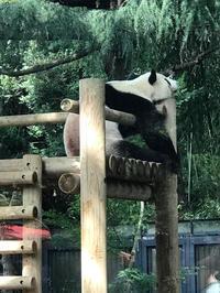 上野動物園と もんじゃ焼き - ミセス サファイア 静けさの中で