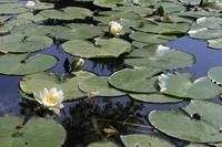 北海道大学大野池 - polepoleな日々