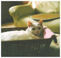 白猫 -  one's  heart