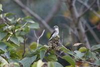 渡りの立ち寄りの鳥に逢いに - 私の鳥撮り散歩