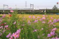 こすもす - 新幹線の写真
