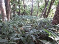 中之条町 登る時季を間違えた高間山     Mount Takama in Nakanojō, Gunma - やっぱり自然が好き
