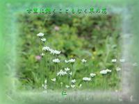 フォト575qq2605『古里に飽くこともなく草の花』 - 老仁のハッピーライフ