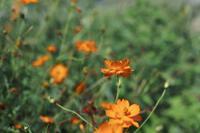 陽だまりの中≪荒れ果てたミニ花壇≫ - そよ風のつぶやき