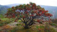 上信越高原国立公園はすっかり秋の気配濃厚だった - 『私のデジタル写真眼』