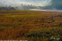 小田代の草紅葉 ・・・ - ぶらりカメラウォッチ・・