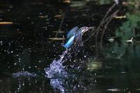 水面からの飛び出し - fumufumu日記