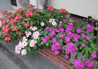 頑張ってるね!! - 山の花、町の花