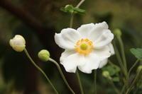 9月の赤城自然園(2) 花々 (撮影日:2017/9/22) - toshiさんのお気楽ブログ