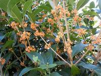 路傍の花、樹々の鳥(183)~秋の花三点セット~ - 大屋地爵士のJAZZYな生活