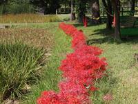 赤い花と大きなチョウチョ - 晴れ時々?日記