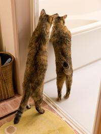 お風呂が空だよ - 猫と夕焼け