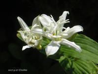 白いお花とデジカメ - Photo Album