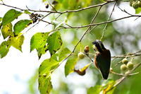 ヤマガラ(山雀)の季節 - 身近な自然を撮る