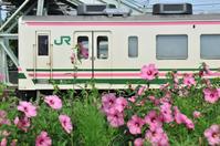 夏の花とサンドイッチ電車 - このひとときを楽しもう