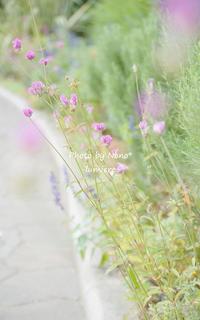 Hello autumn* - lumiere*