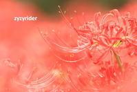 炎のように - ジージーライダーの自然彩彩