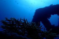 17.9.28 東・ボートで - 沖縄本島 島んちゅガイドの『ダイビング日誌』