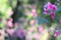海蔵寺の萩と芙蓉 - 木洩れ日 青葉 photo散歩
