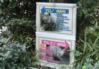 上野動物園のクロサイ 2017.09.20 - ごきげんよう 犀たち