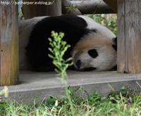 2017年9月 王子動物園2 その1 台風接近中の誕生会当日 - ハープの徒然草