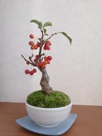 またまた赤い果実 - アーティスティックな陶器デザイナーになろう