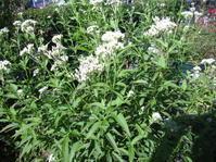アサギマダラを待つ庭 - 花の自由旋律
