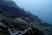 17.9.29西・ボートに - 沖縄本島 島んちゅガイドの『ダイビング日誌』