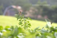 小さい鳥たち - ekkoの --- four seasons --- 北海道