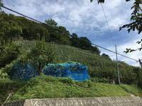 (丹波名所)春日農園 2017 / Kasuga Farm - Macと日本酒とGISのブログ
