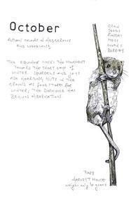 10月 -生け垣にも、森にも、秋の彩り- - ブルーベルの森-ブログ-英国のハンドメイド陶器と雑貨の通販