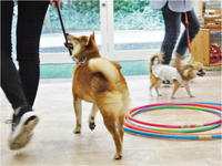 犬のしつけ方教室 9/29 - SUPER DOGS blog