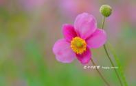 早秋の出合い - 花々の記憶