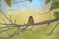 カラ類の集い、、、ドリンクバーにて! - healing-bird