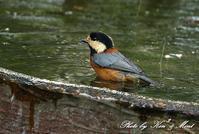 お山で混浴♪「ヤマガラ」さん他♪ - ケンケン&ミントの鳥撮りLifeⅡ