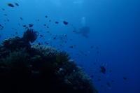 17.9.30アッと言う間に9月も最終日! - 沖縄本島 島んちゅガイドの『ダイビング日誌』