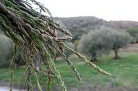 秋なのに育つ野生のアスパラガス、イタリア ペルージャ - イタリア写真草子 - Fotoblog da Perugia