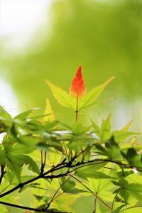 秋色 - 日々安閑として