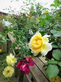 お花と雑貨とカフェ*フラワーフィールド ガーデンズ&RK GARDEN @追分 - ぴきょログ~軽井沢でぐーたら生活~