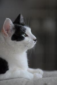 創業感謝祭・第一弾!シロ子 - Black Cat Moan
